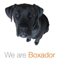 Avatar for Boxador
