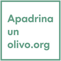 Avatar for Apadrina un olivo